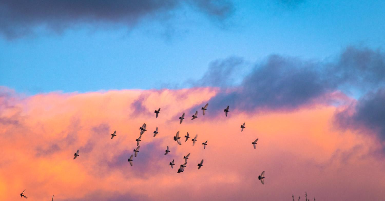 birdsflying4_.jpg