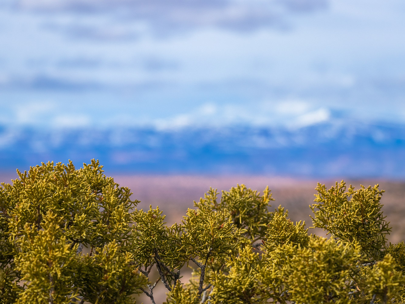 landscape_2_.jpg