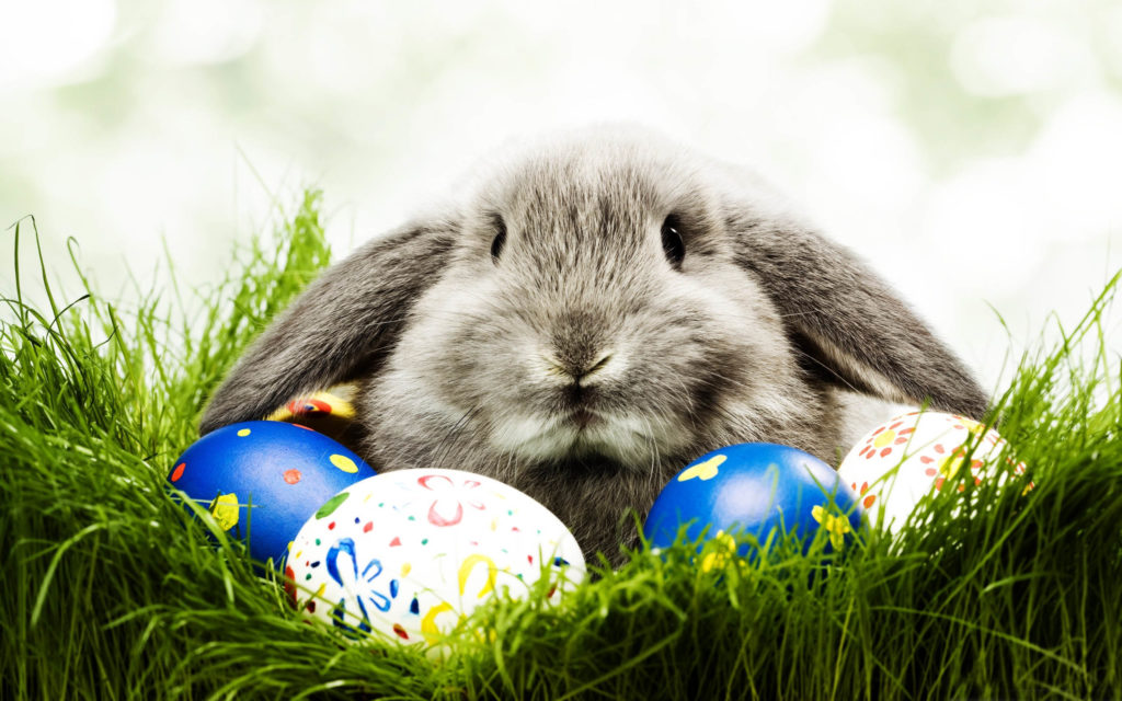 - Easter Bunny Photos