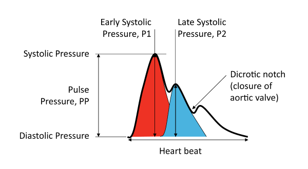 bpplus-ai-radial.png