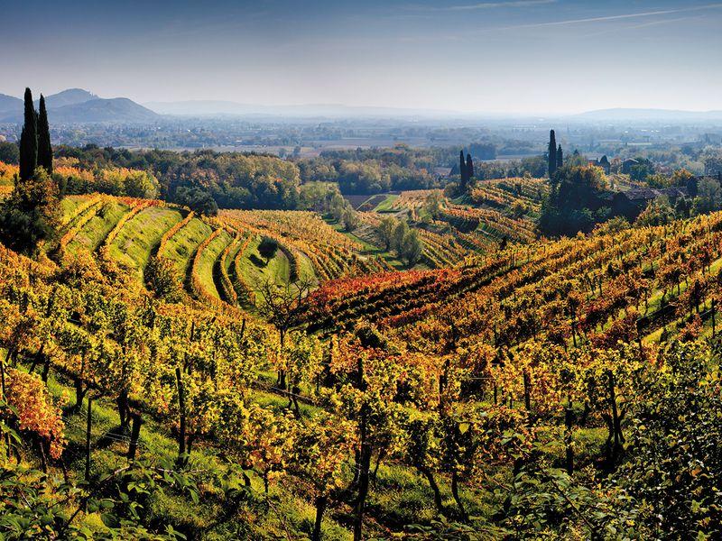Friuli Wine.jpg