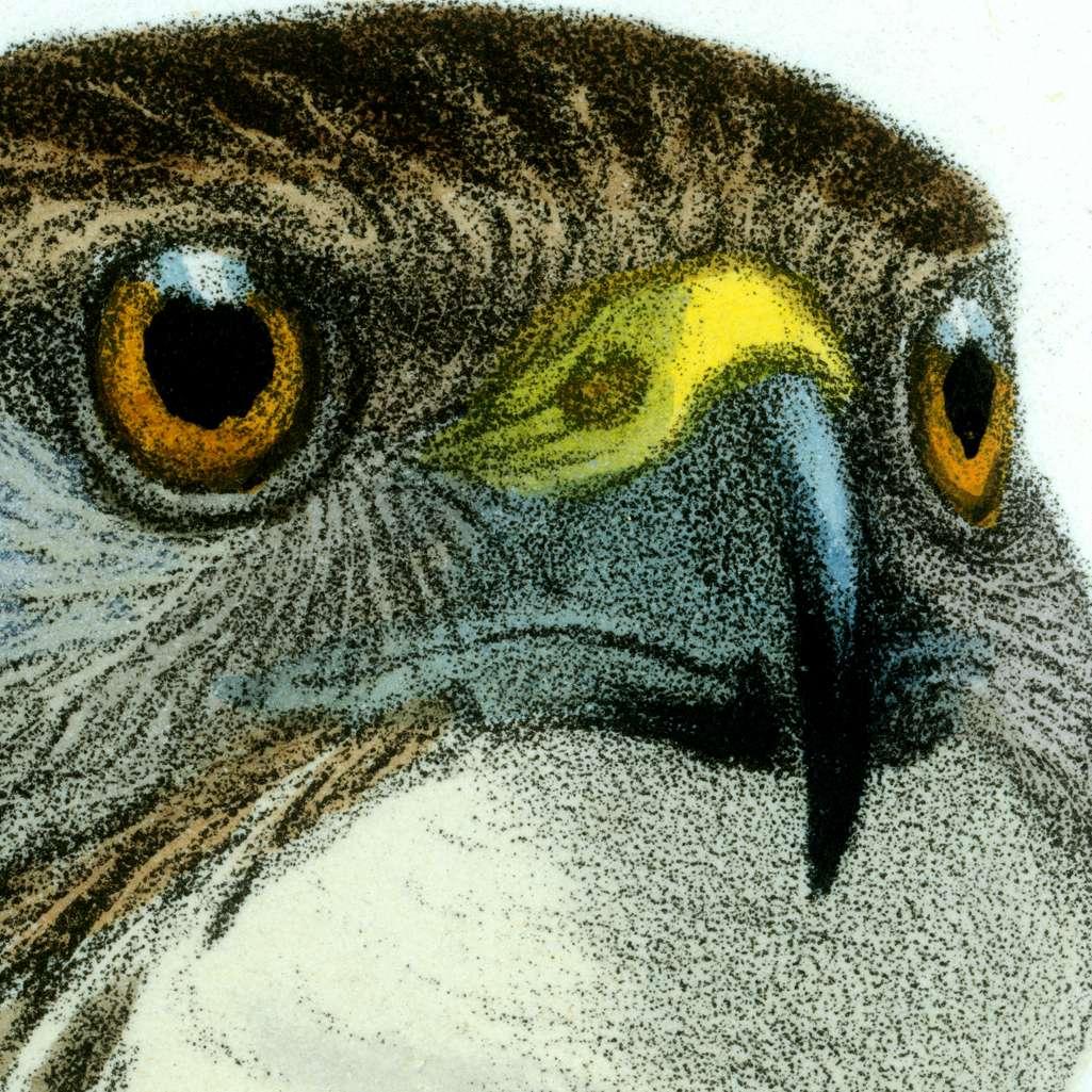 batch_birdsmit5500+ face1920.jpg