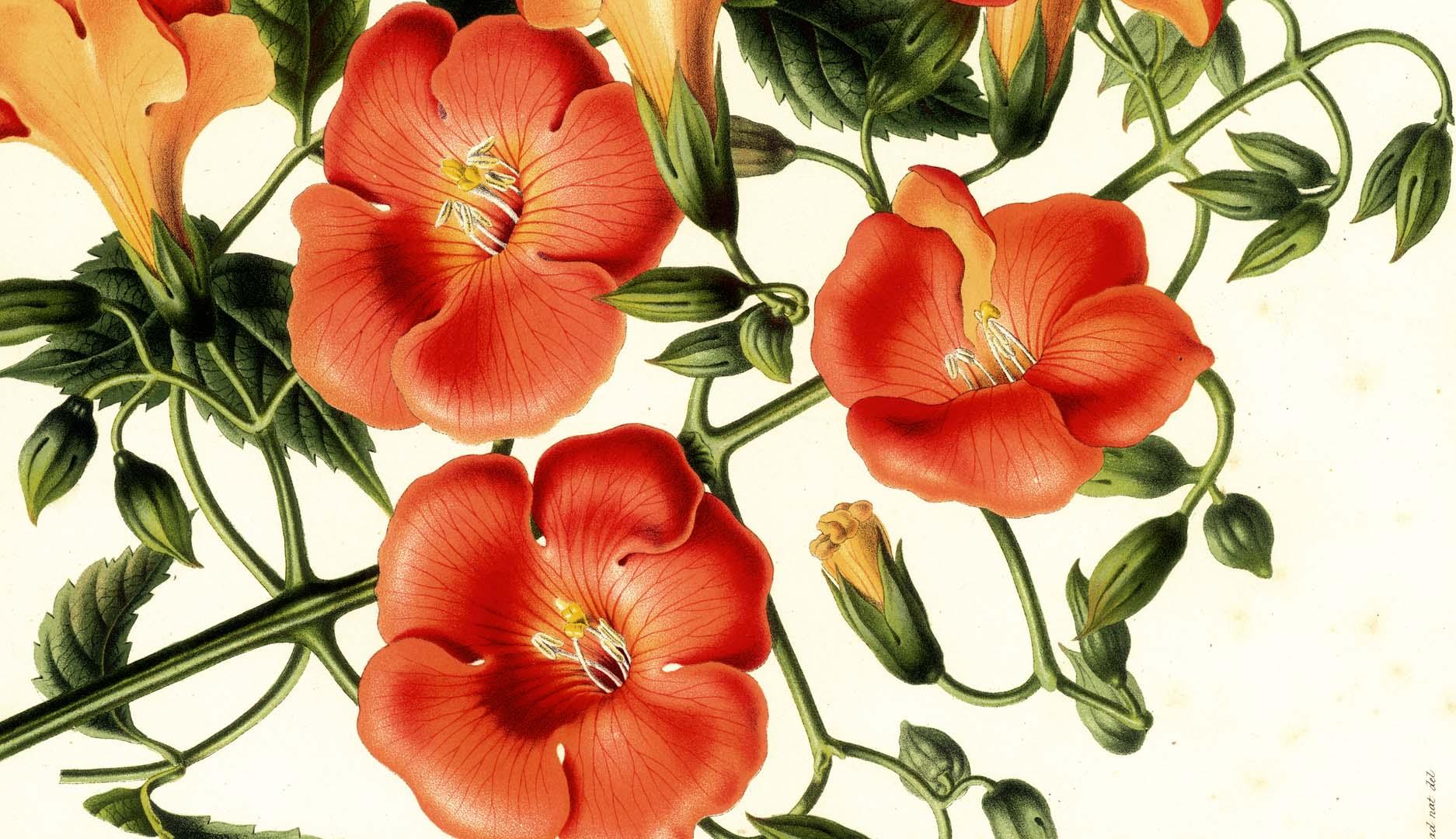 Copy of Orange Flower