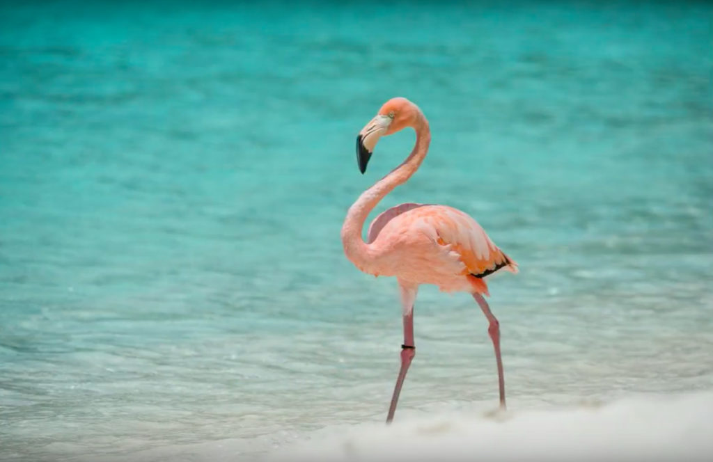 trunk bay flamingo yelena rogers