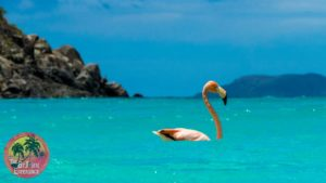 trunk bay flamingo water