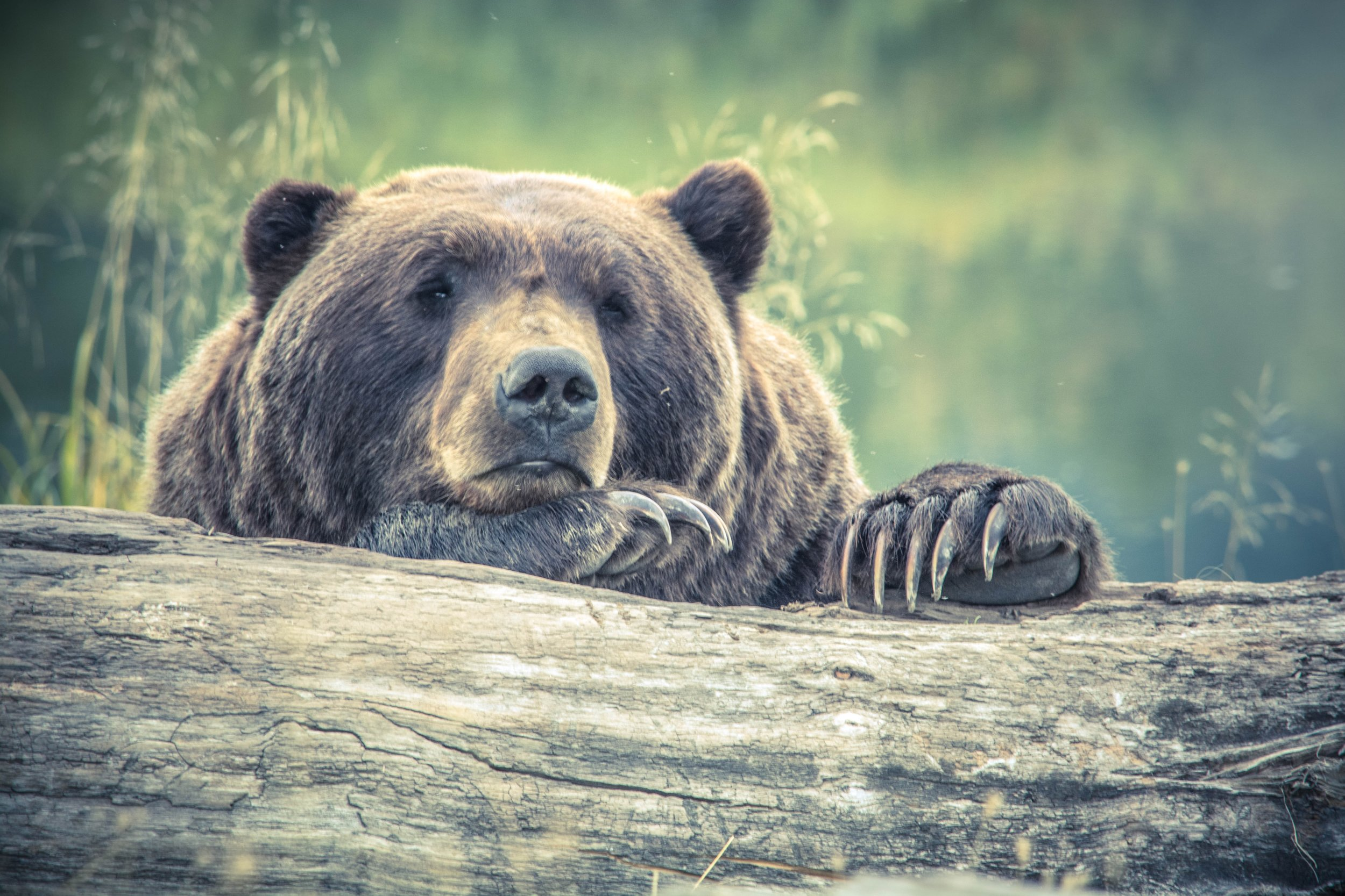 animal-animal-photography-bear-213988.jpg