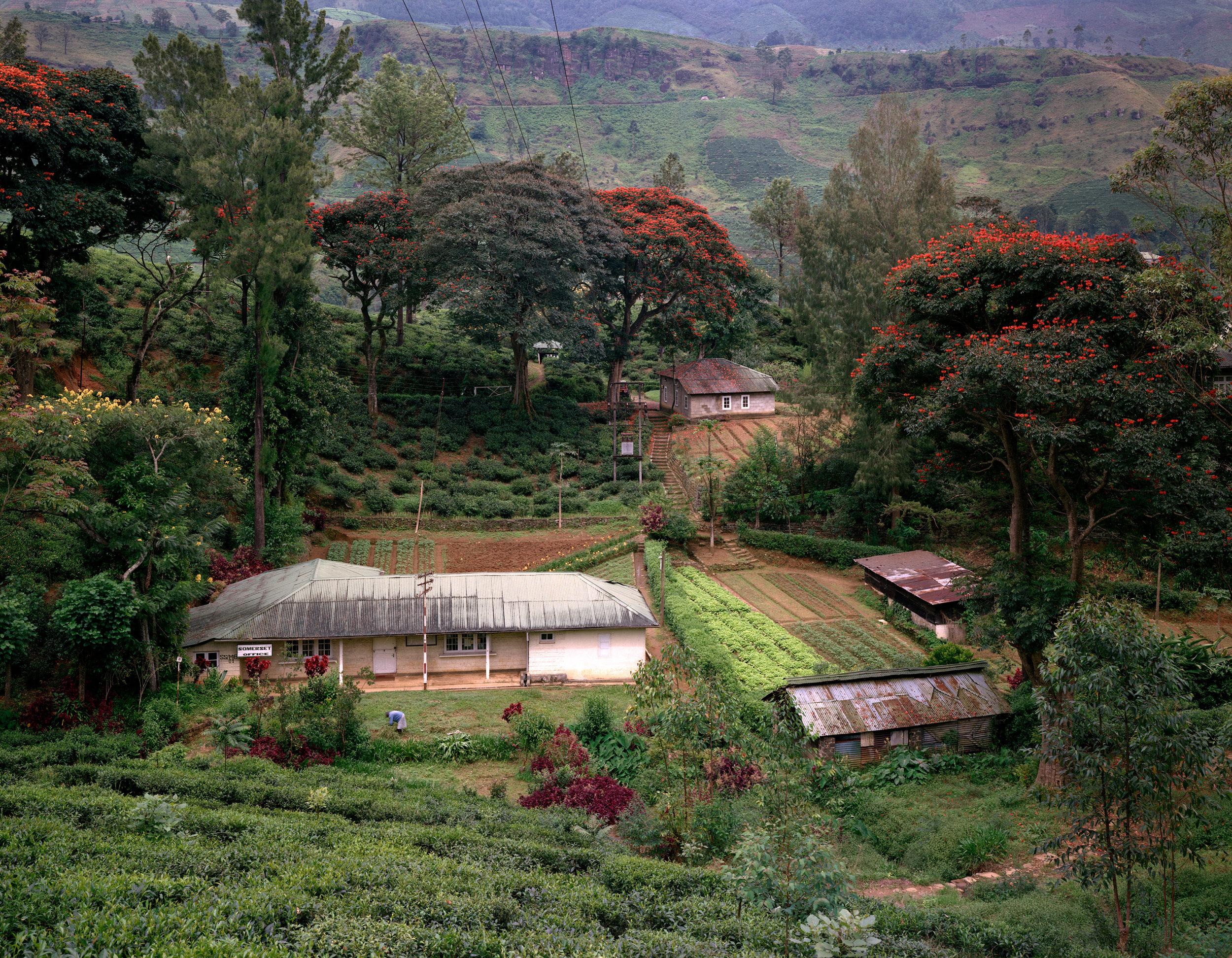 Somerset Tea Plantation Office and Flame Trees in the Jungle, near Nuawra Eliya, Sri Lanka, 1993