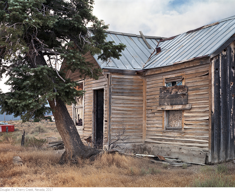 Douglas+Fir,+Cherry+Creek,+Nevada,+2017titledsamesize.jpg
