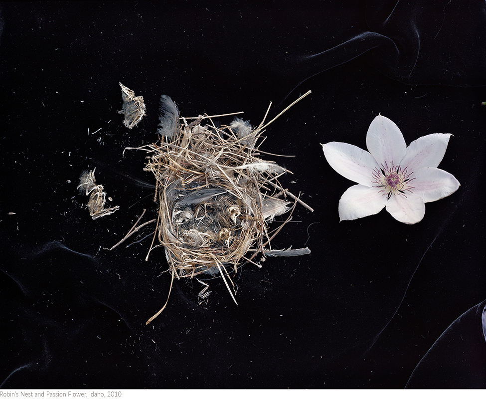 Robin's+Nest+and+Passion+Flower,+Idaho,+2010titledsamesize.jpg