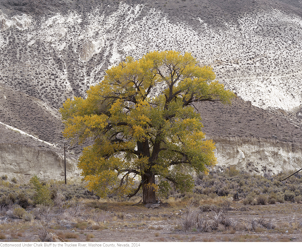 Cottonwood+Under+Chalk+Bluff+by+the+Truckee+River,+Washoe+County,+Nevada,+2014titledsamesize.jpg