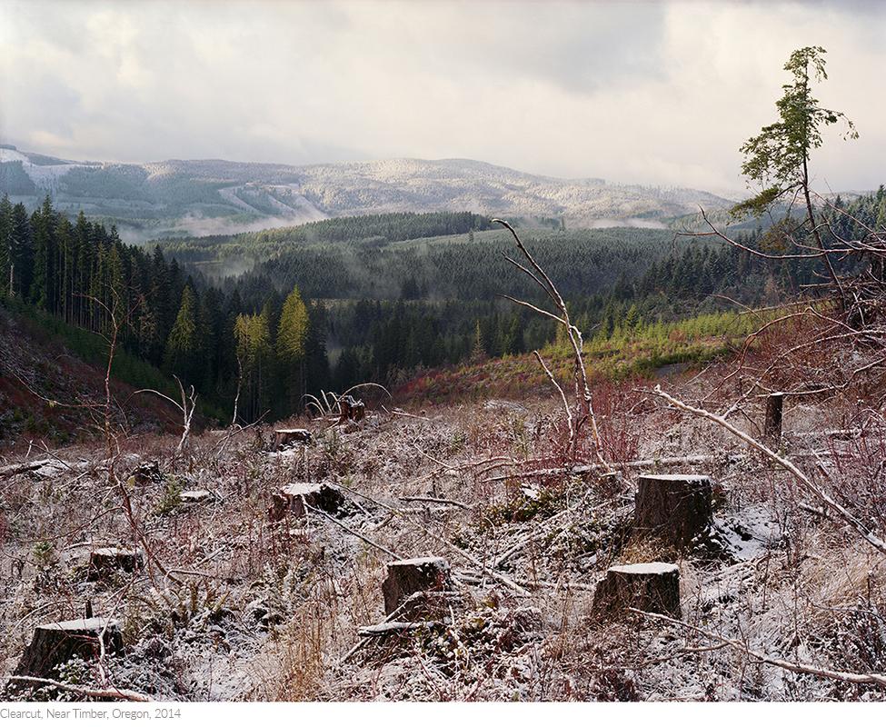 Clearcut,+Near+Timber,+Oregon,+2014titledsamesize.jpg