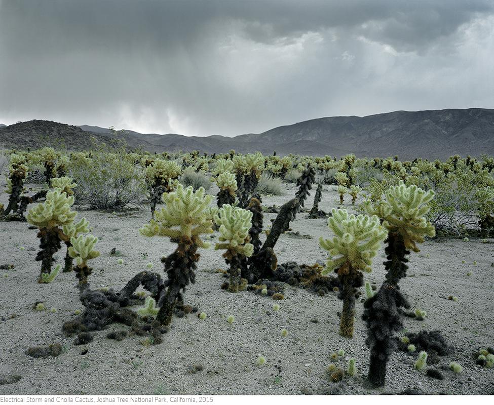 Electrical+Storm+and+Cholla+Cactus,+Joshua+Tree+National+Park,+California,+2015titledsamesize.jpg