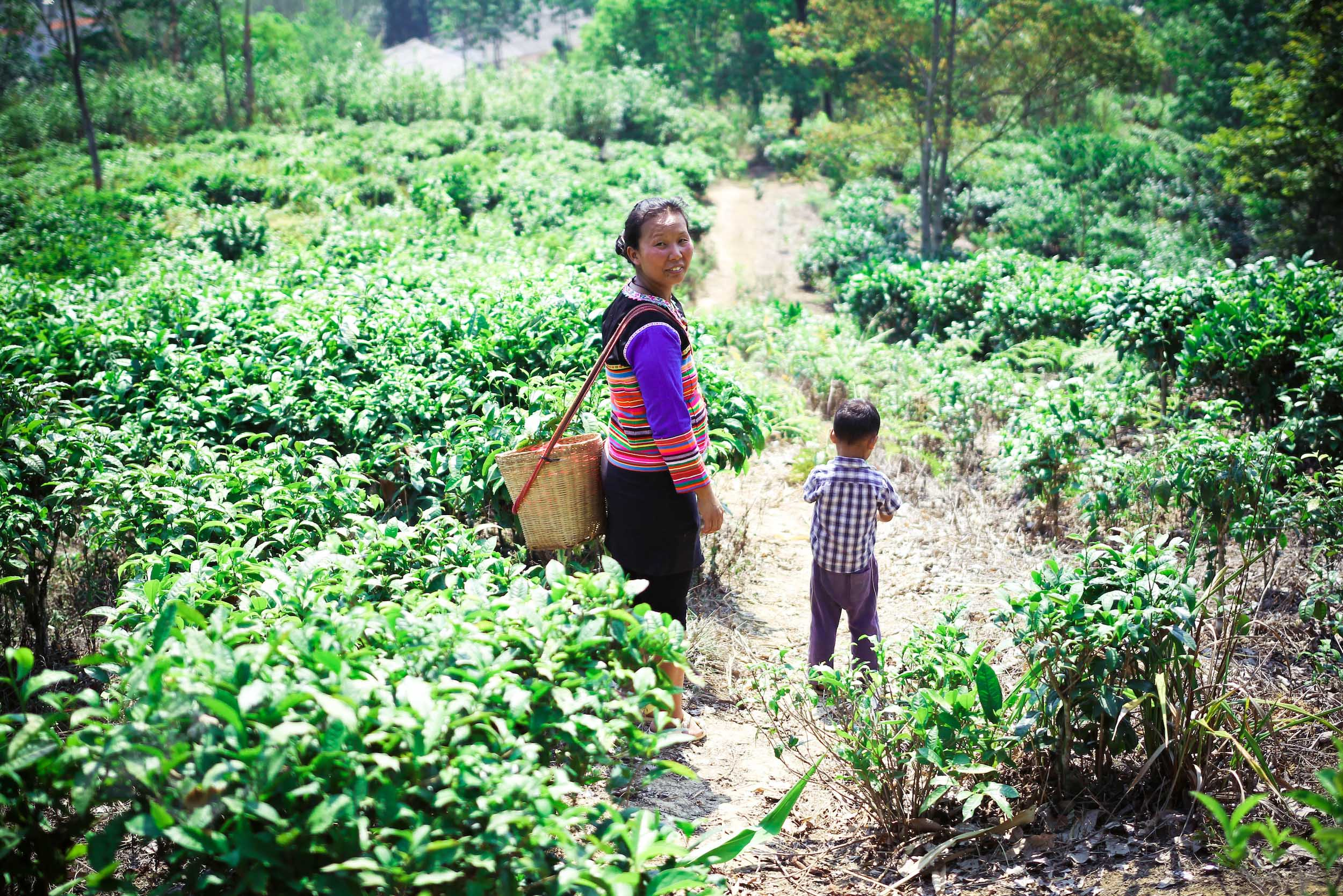 Mother and Son from Tea Farmers of Yunnan - 2016, © Jin Zhao