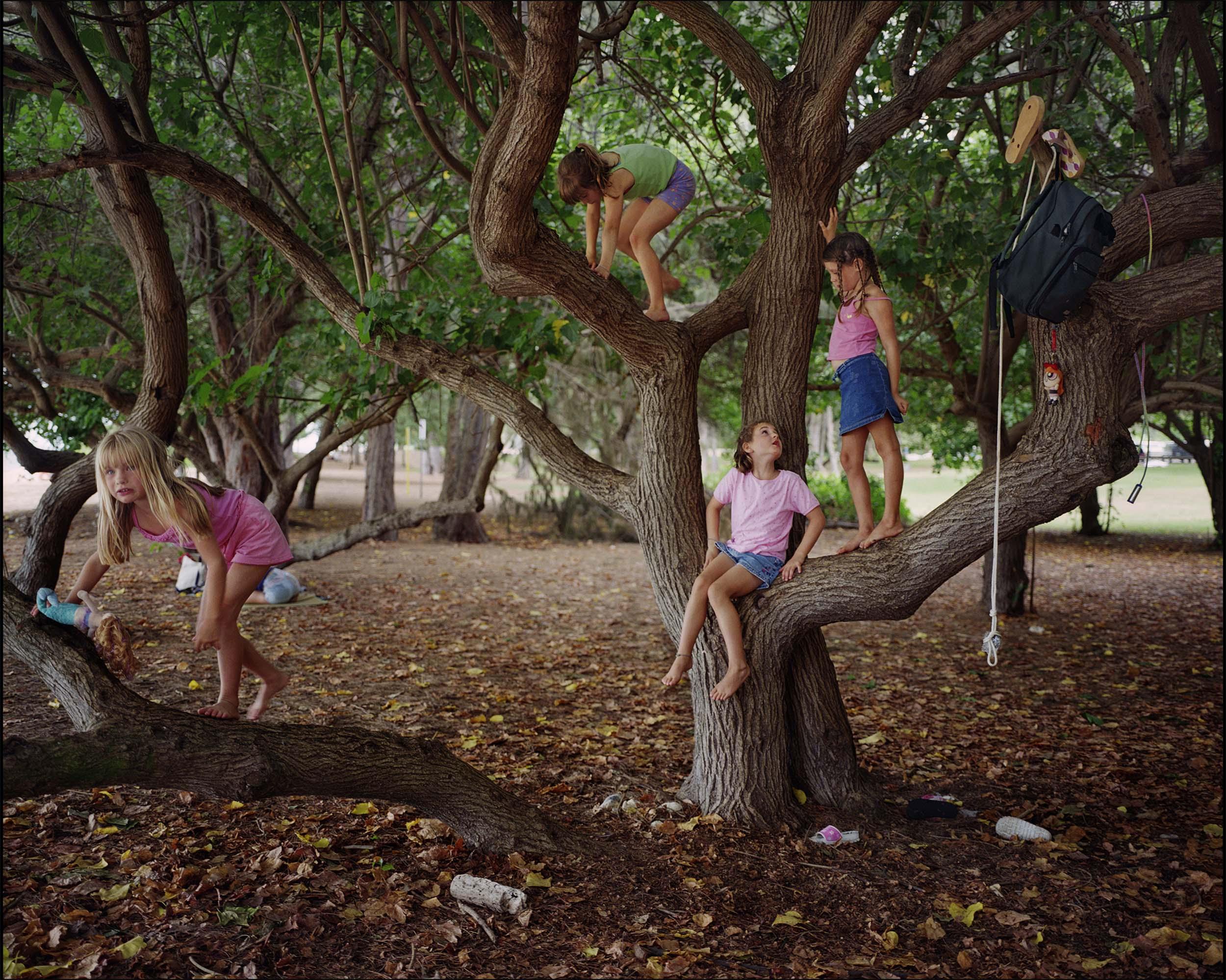 Portia Tree - 2002, © Melissa Ann Pinney