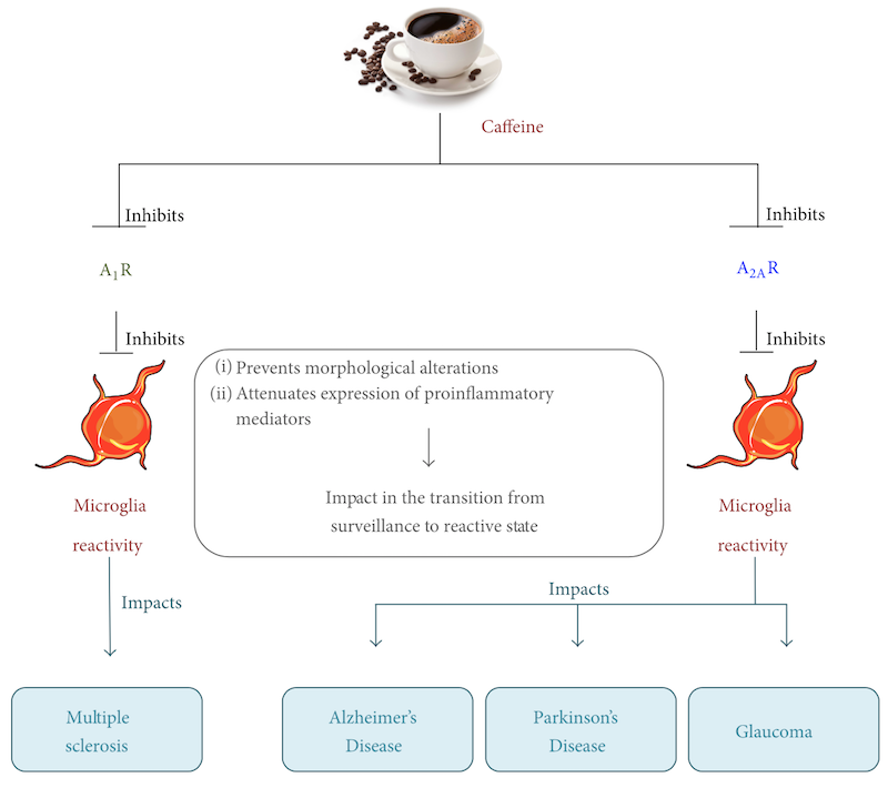 Gene response profile of the four groups of rats smelling coffee. Control group had no stress, no coffee draft; S tress group had no sleep, no coffee draft; C offee group had sleep and coffee draft; S tress + Coffee group had no sleep and a coffee draft. The red arrows point to protein responses at time of stimulation (coffee draft); the yellow arrows at time of reducing stimulation.