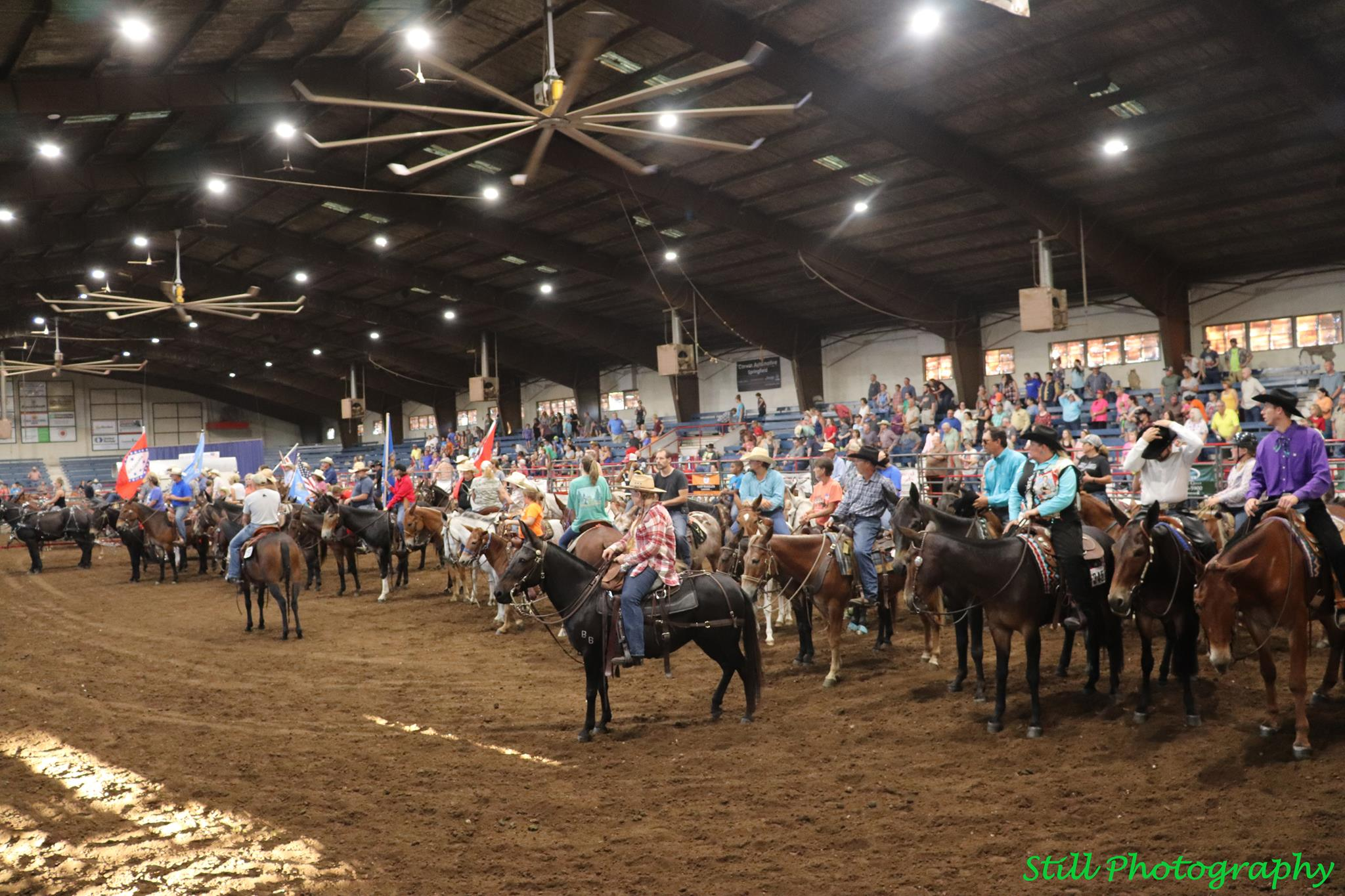 The Grand Entry at Ozark Mule Days