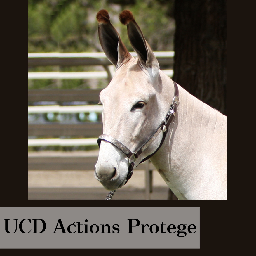ucdactionsprotege.jpg