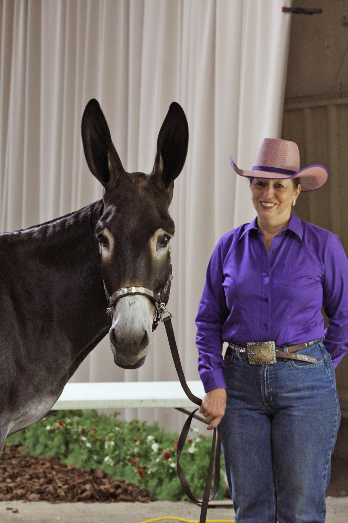 donkey halter.jpg