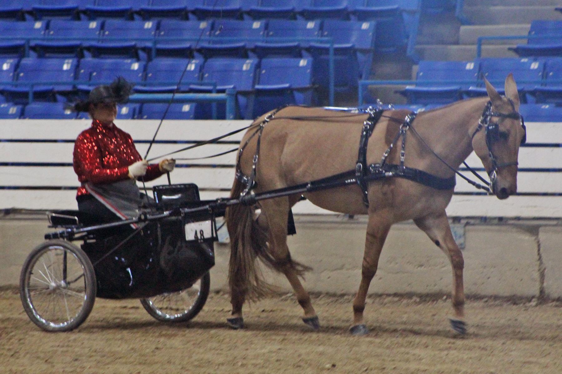 goode driving mule.jpg