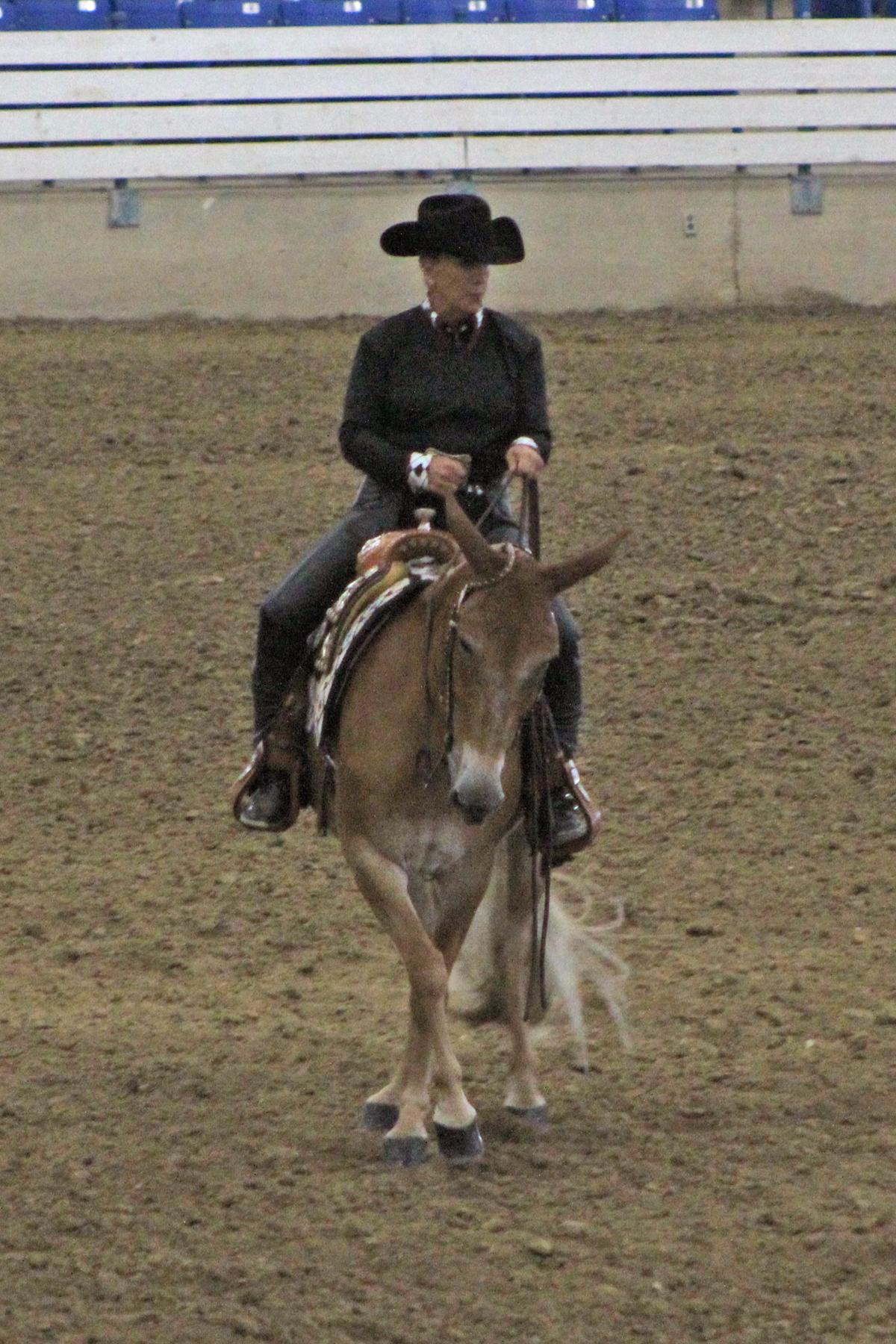 reddish reining.jpg