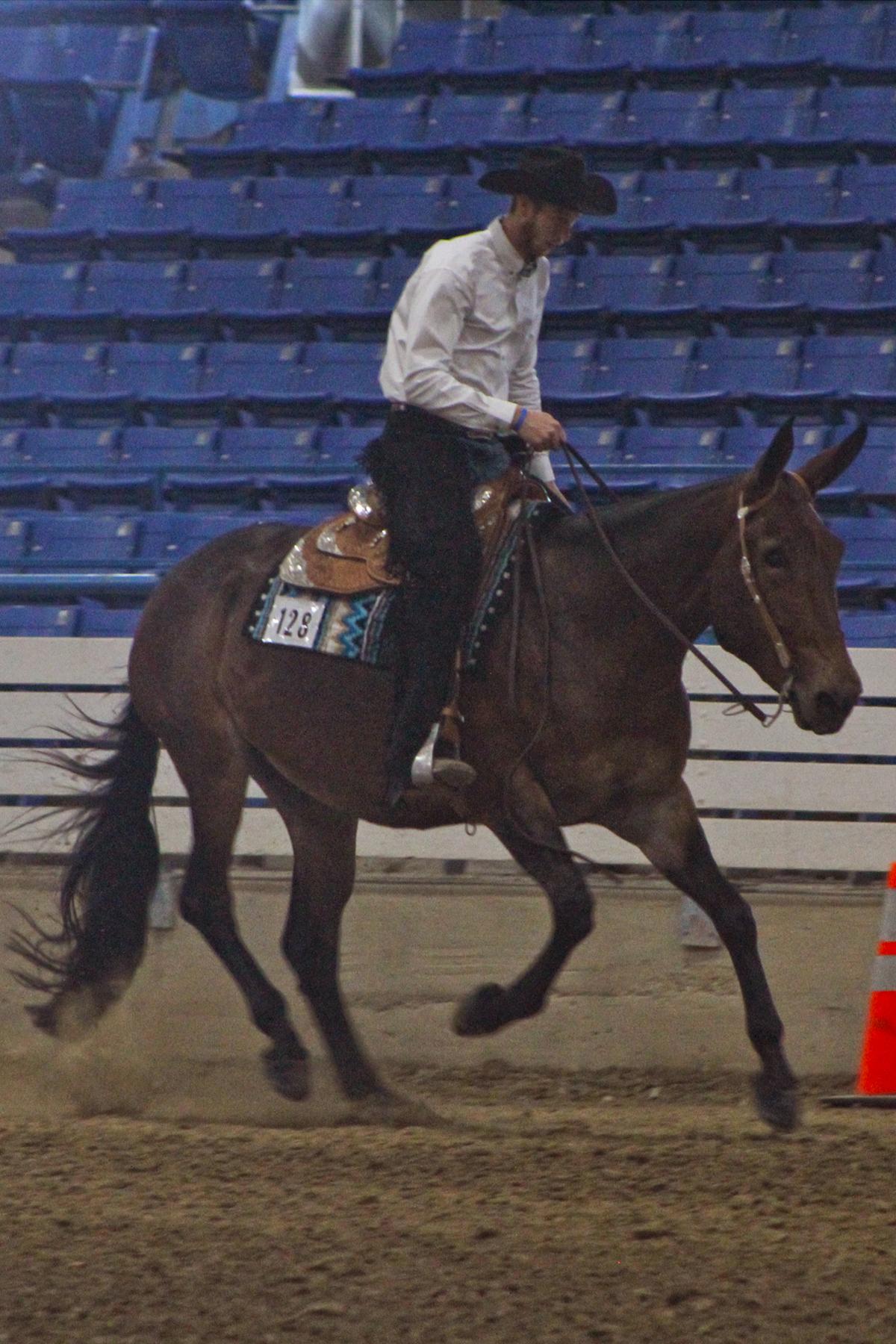 kidd reining.jpg