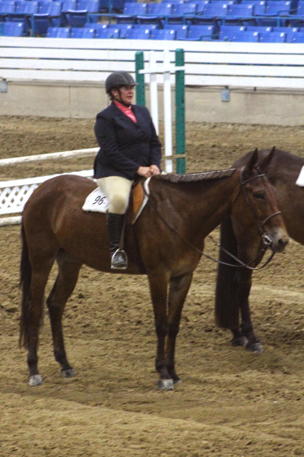 Sarah Stephens on C More Leg (Open Mule Working Hunter Champion)