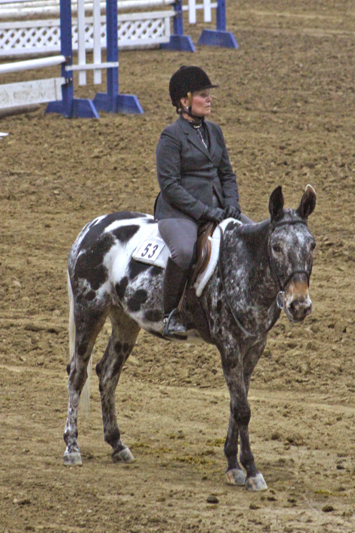 Terri Hurley and MV Ben's Limited Edition (Silver Amateur English Equitation and Amateur English Equitation Champion)