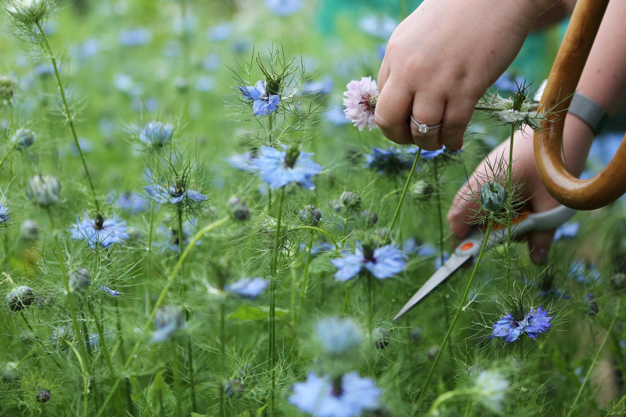 nigella-flower-crowns.jpg