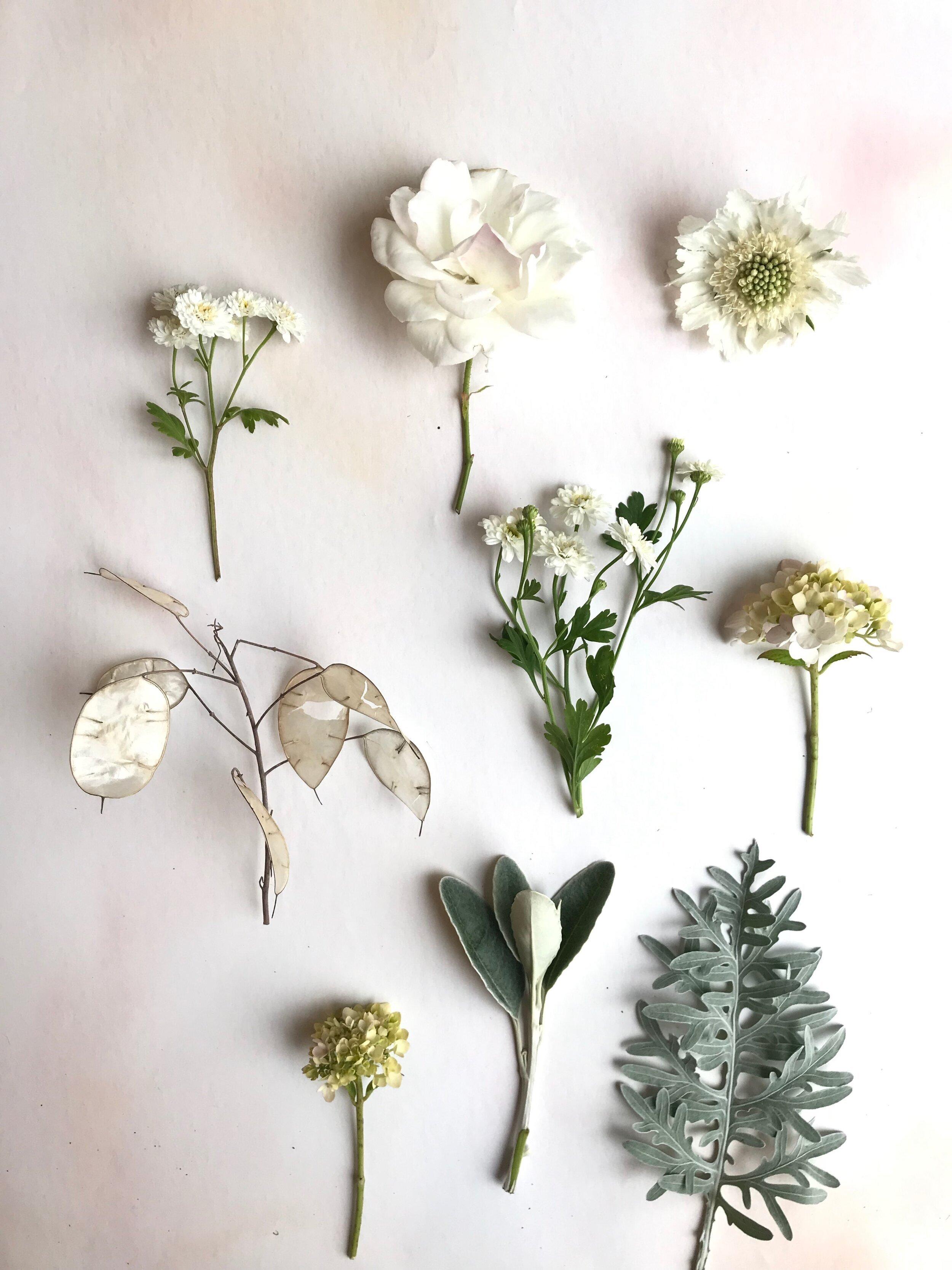 flowers-foliage=flower=crown.jpg