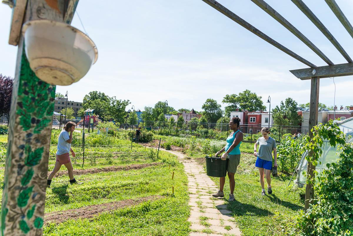 Common-Good-City-Farm-20190622-228-Web-Res.jpg