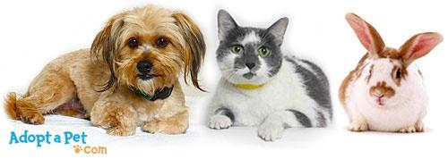 how-to-adopt-dog-cat-rabbit.jpg