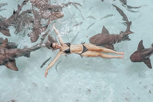 I told the sharks don't worry I won't bite 🦈  • • • • Tag us @ExumasExperience #ExumasExperience to be featured. #travelawesome #travels #exumas #exumabahamas #travelplans #stanielcay #compasscay  #traveltheworld #travelblogger #travelbuddies  #travelbug #travelers #travelexploring #travelguide #traveling #travelinggram   #traveltheworld #tropical #tropicalparadise #wanderlust #wanderoften  #beachresorts #beachlifestyle #beachliving #tropicalisland #tropicalwayoflife #wanderlusters #travelismylife #wanderfar  📷 @audryefaye 