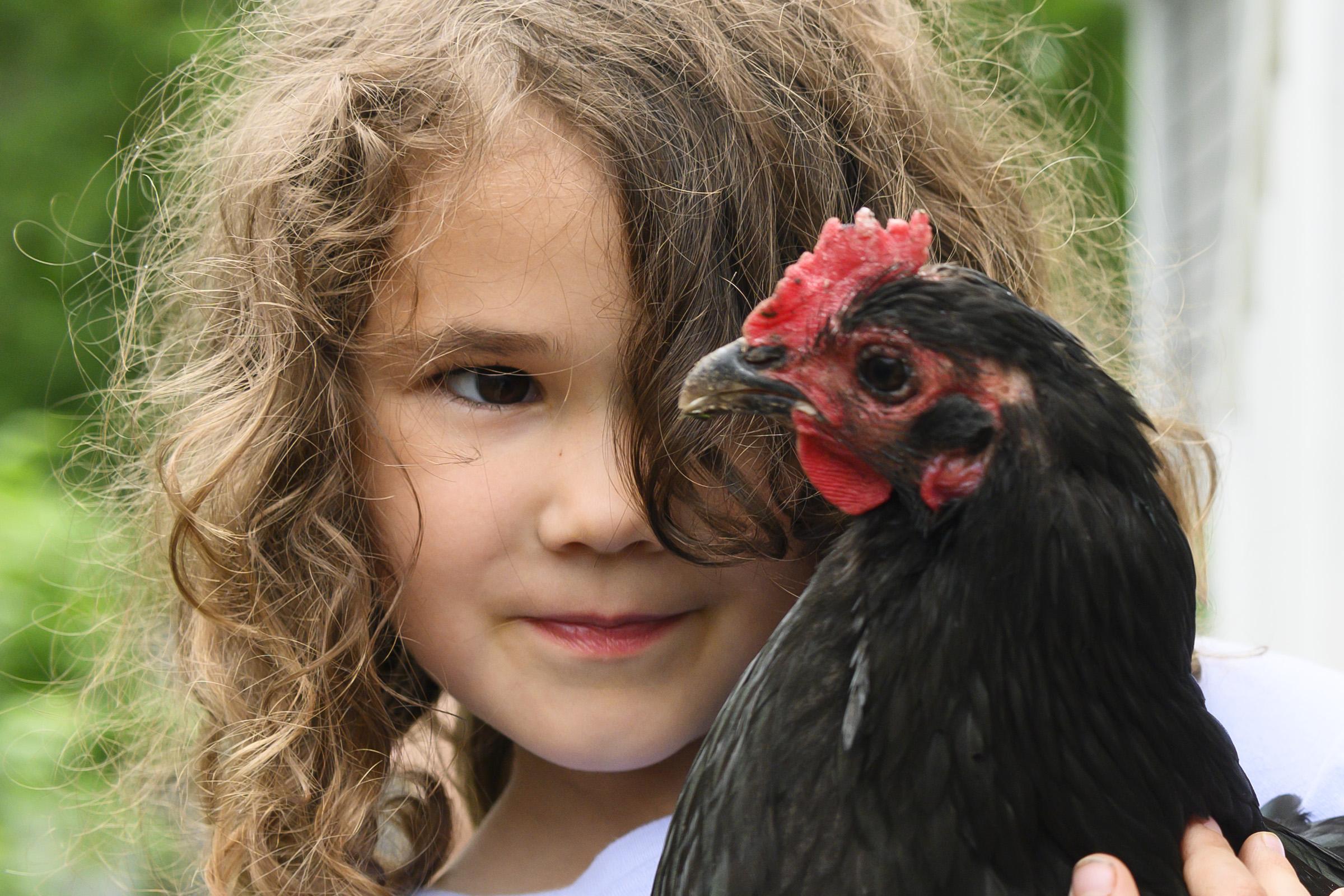 chickens001.jpg