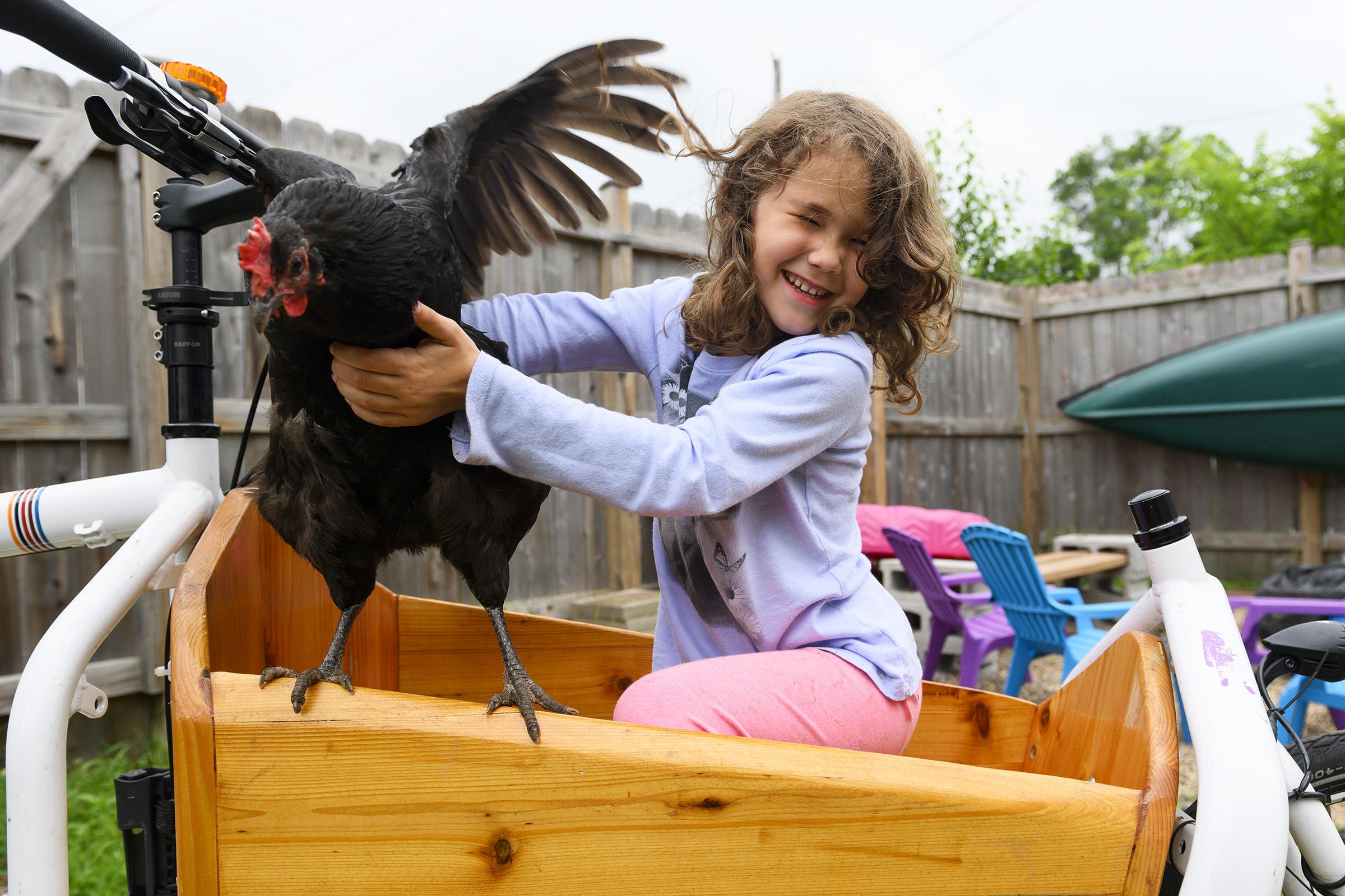 chickens006.jpg