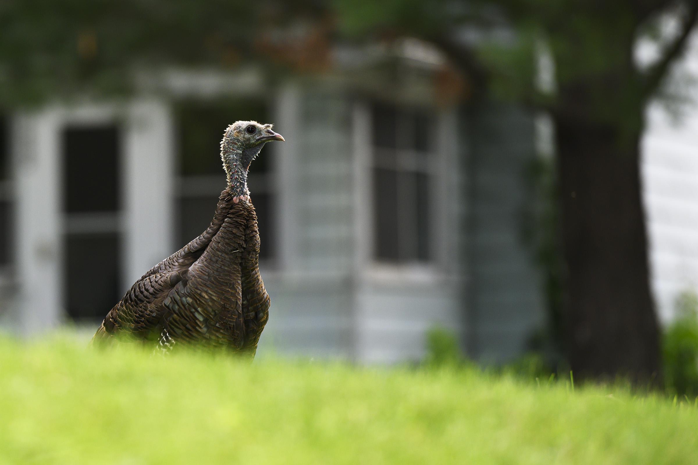 turkey02.jpg