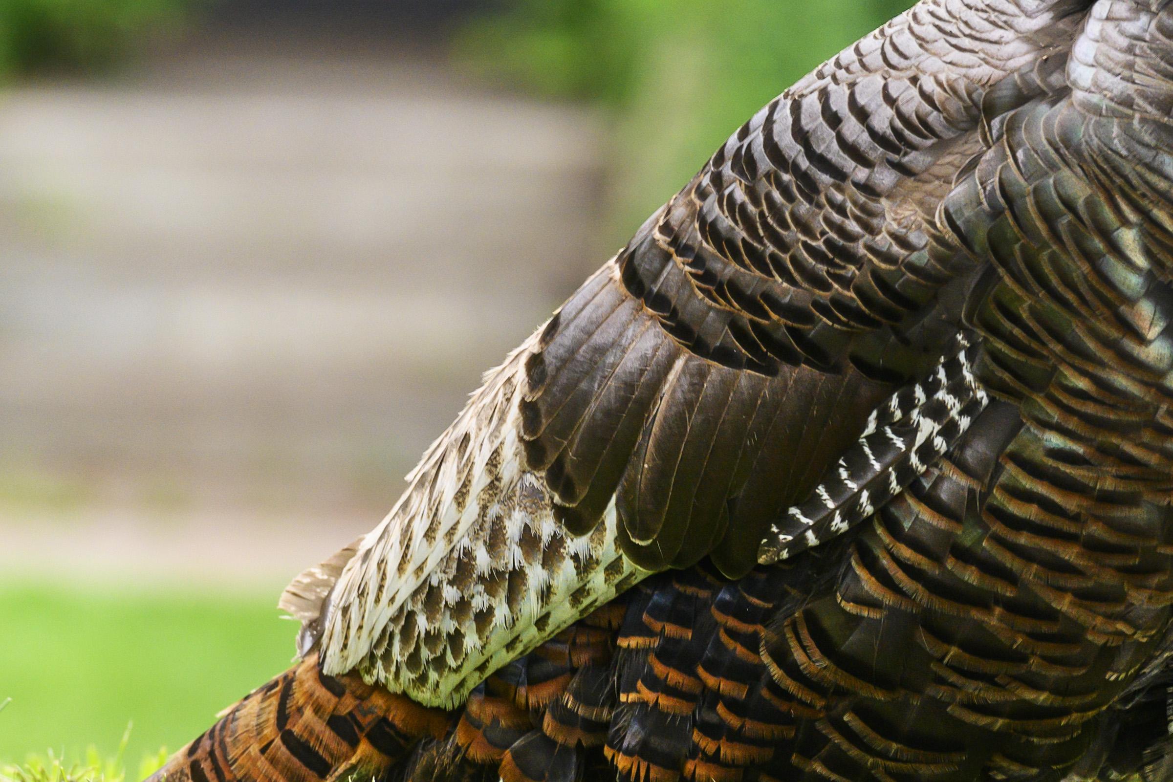 turkey09.jpg
