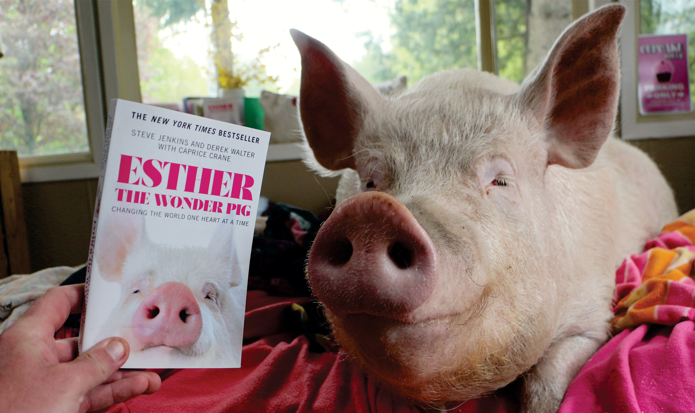 Esther's Books.jpg