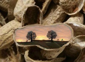 Life-In-A-Nutshell-by-Diamante-Lavendar-300x219.jpg
