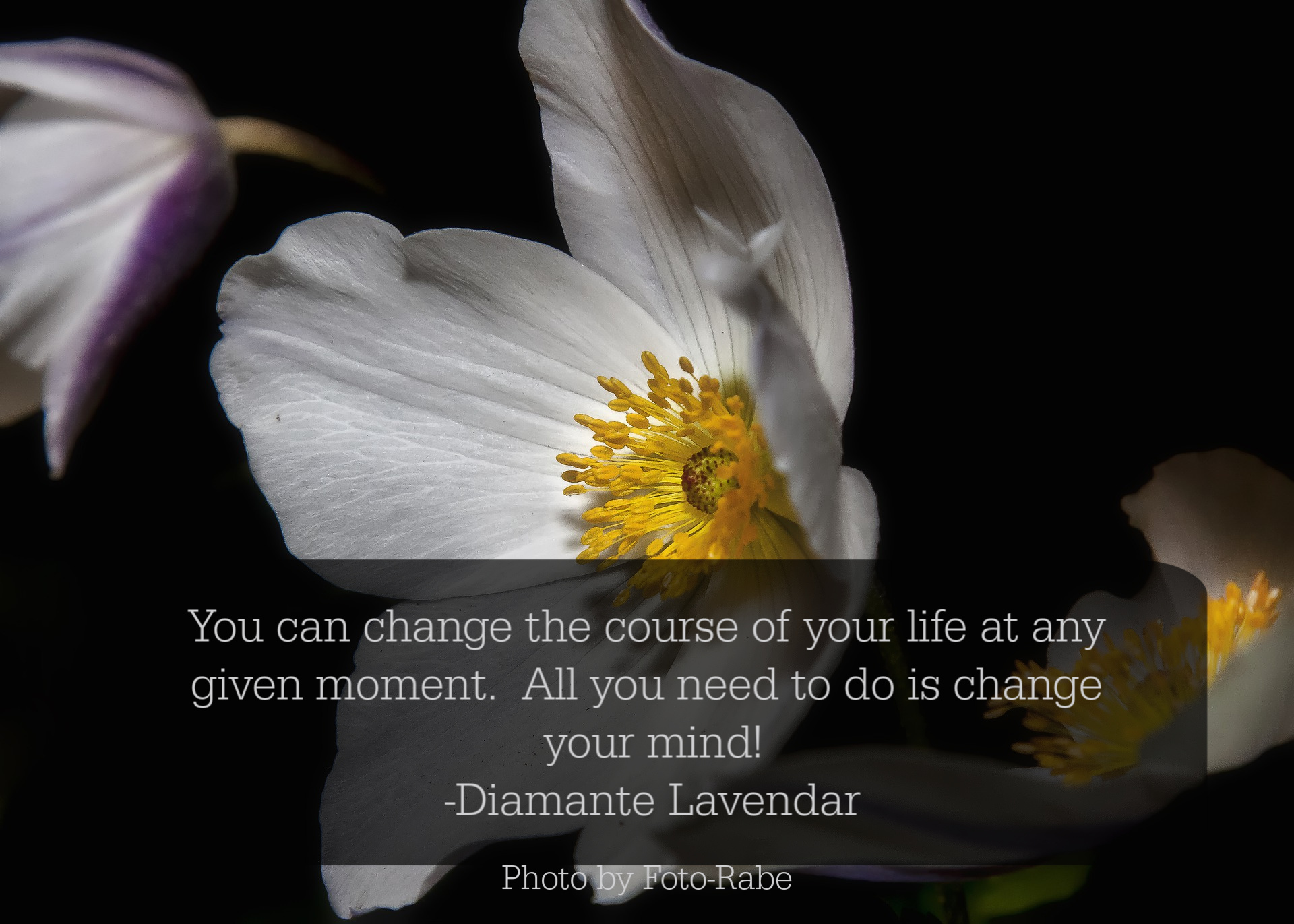 Change your mind quote by Diamante Lavendar.jpg