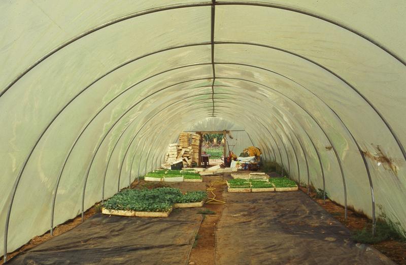 greenhouses2.jpg