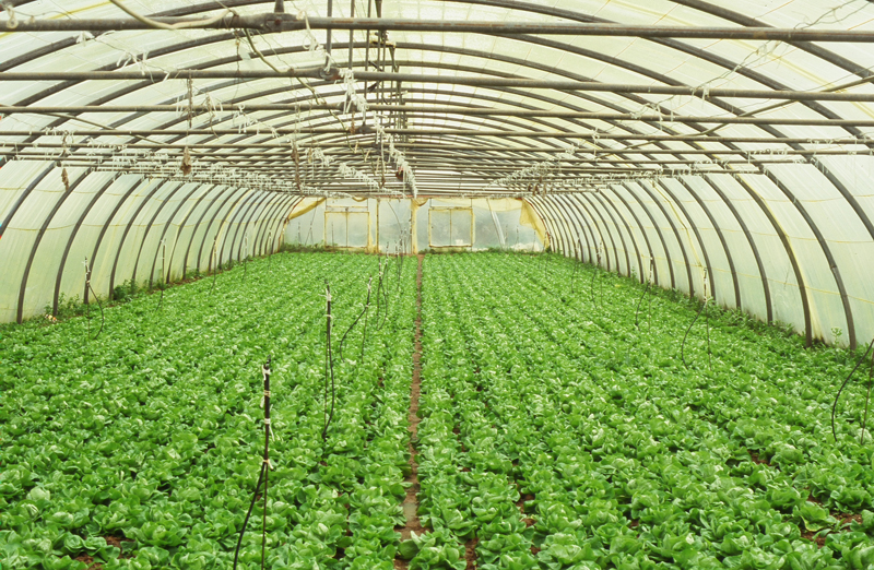 greenhouses5.jpg