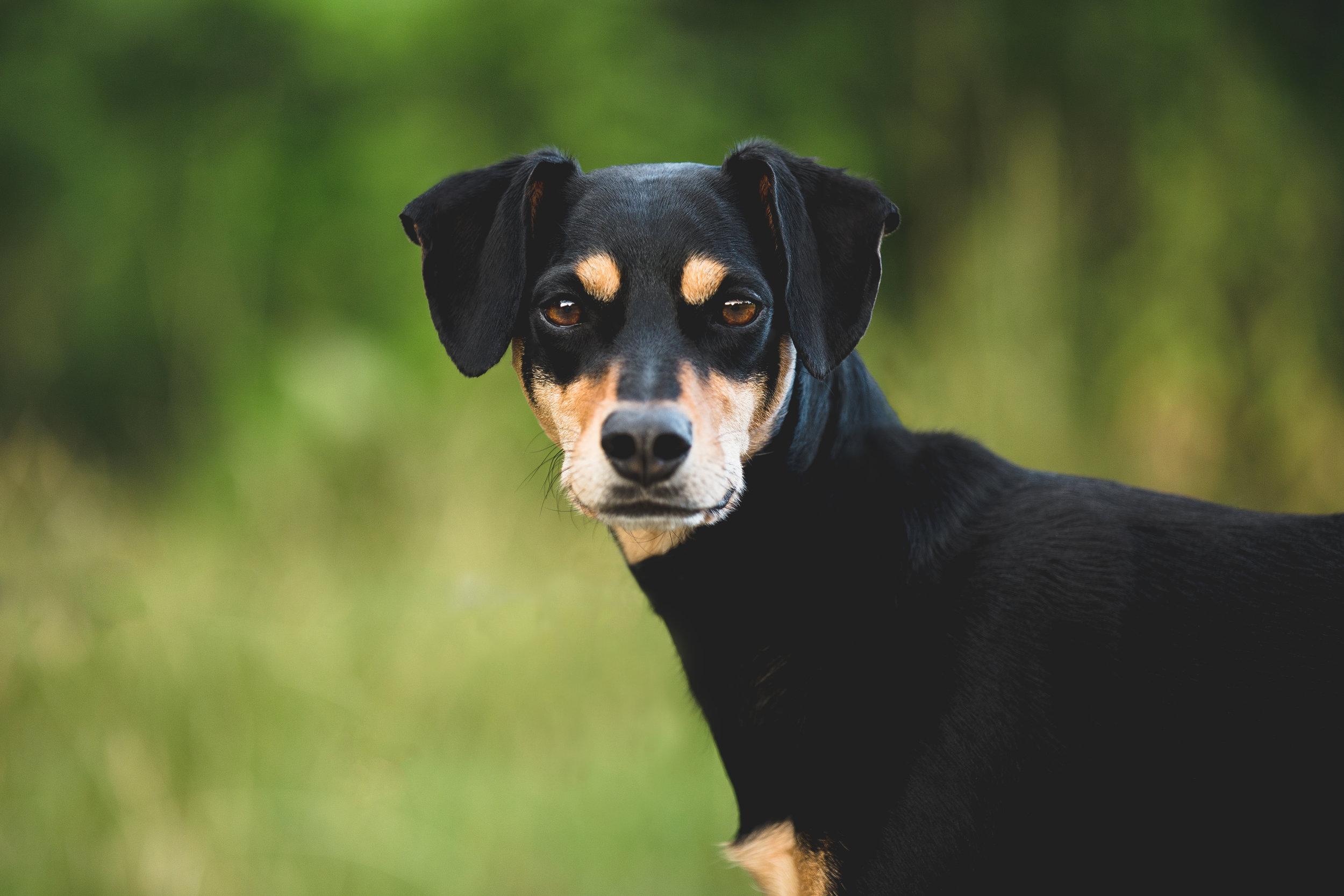 healthy dog by_onistocke-dchgsvn.jpg