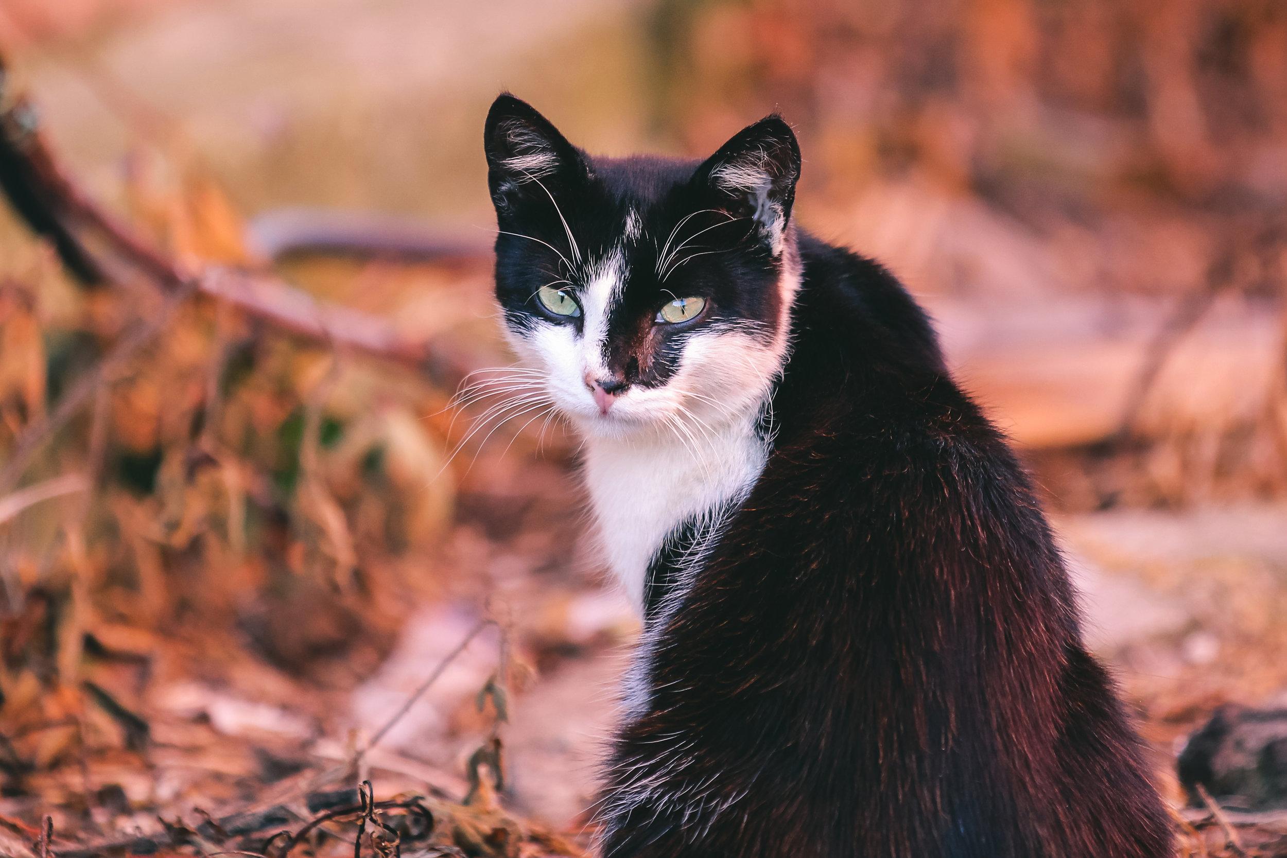 healthy cat by_onistocke-d7ryrw0.jpg