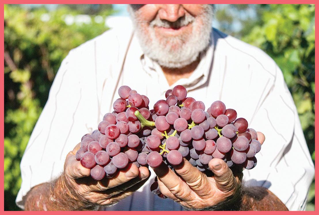 GrapesBorder6.jpg