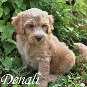 Denali - SOLD