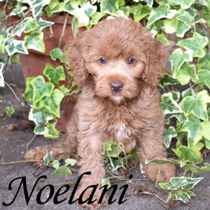Noelani - SOLD
