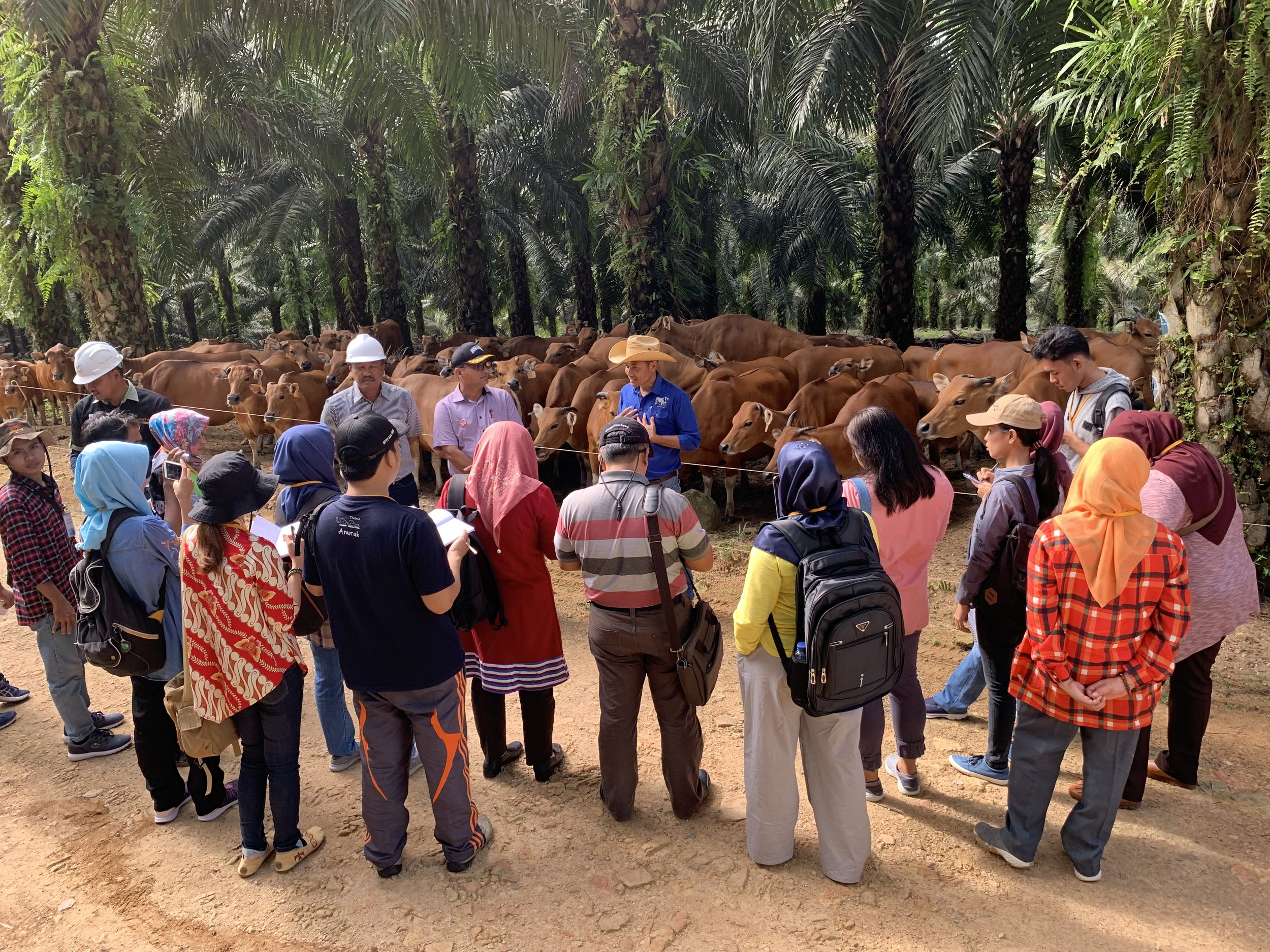 Sulung Ranch Field Visit for PalmCow Field Officer Training Mic Halliday.jpg