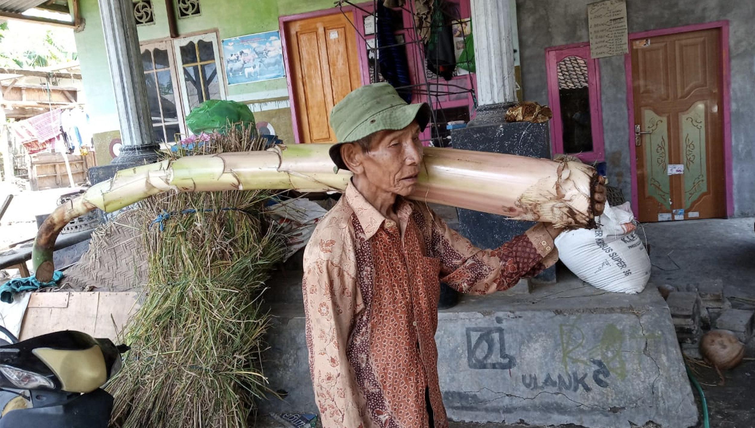 Bulan Semu farmer group member carrying a banana stem as cattle feed.  Photo: Muhamad Sukri