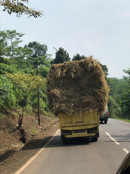 Rice straw being transported to the feedlot.