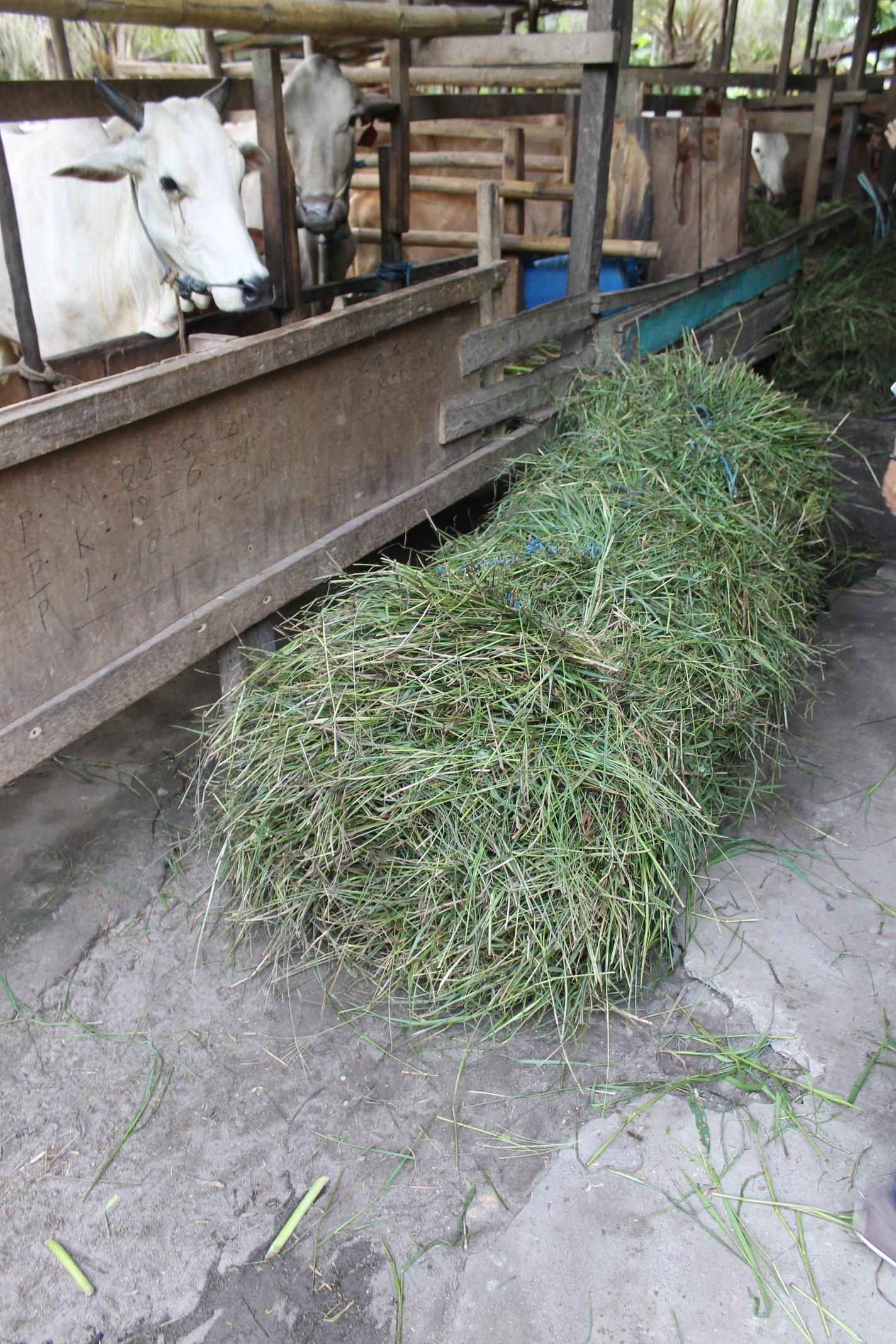 Cut and carry feed rolls transported by motorbike, Mekar Jaya village, East Kalimantan.